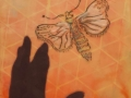 Moth & shadow